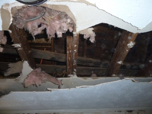 The original plaster board ceilings had been covered with drywall.
